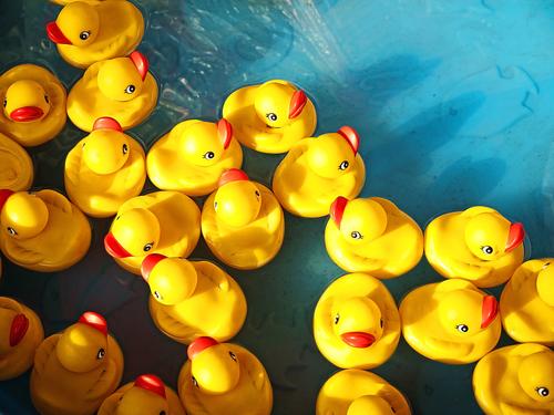 Rubber Duck Race Sports Community